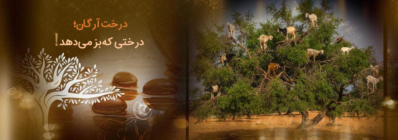 همه چیز درباره ی درخت و میوه ی آرگان