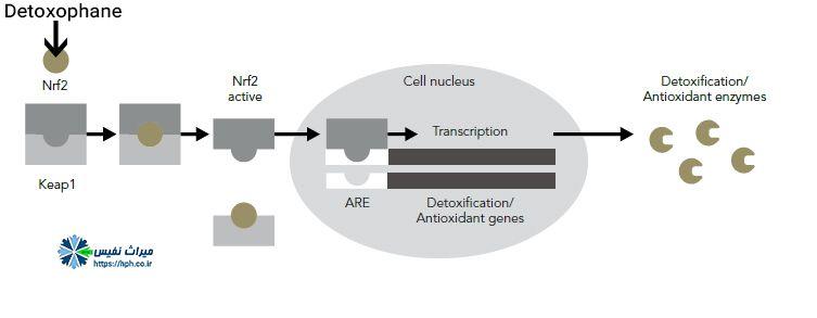 مکانیسم عمل محصولات ضد آلودگی هوا