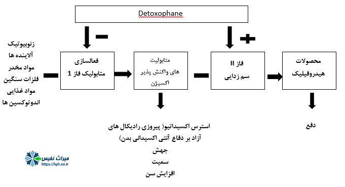 Detoxophane - سیستم فاز II / آنزیم های آنتی اکسیدانی